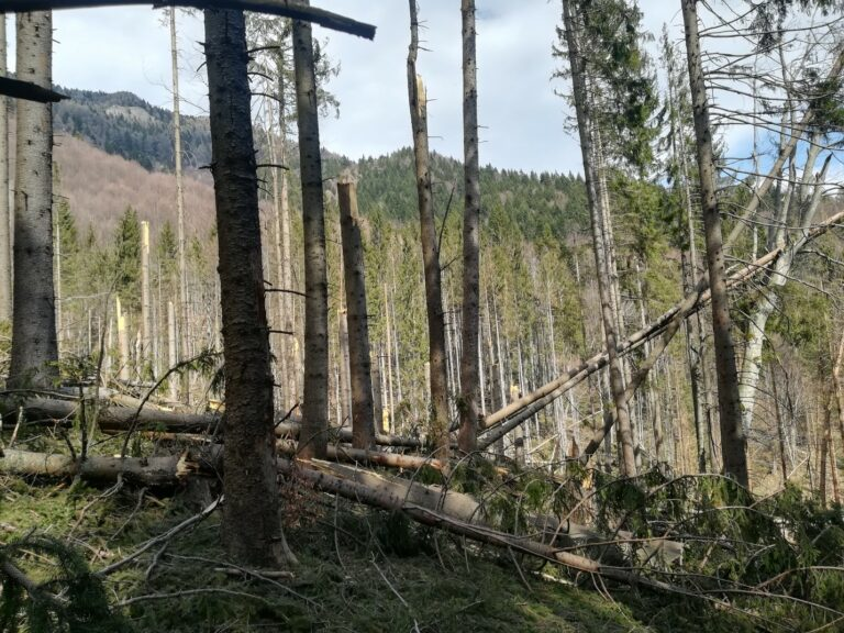 Climate change forces Romania to adapt its forestry practices