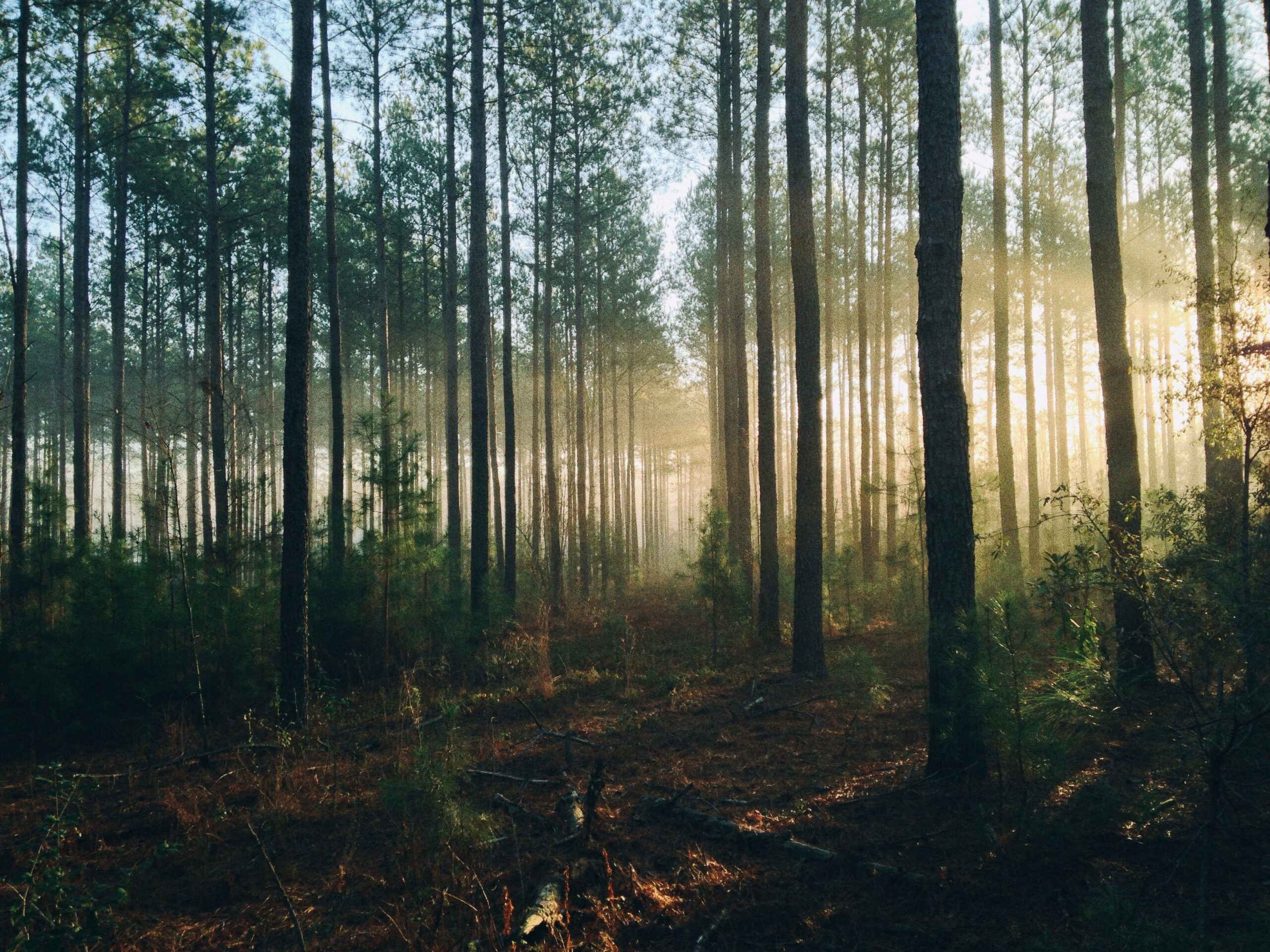 Impact of Climate Change on Forests – Experts across CEE Discuss the Challenges Faced by the Forestry Sector